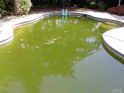 Загрязнение бассейна