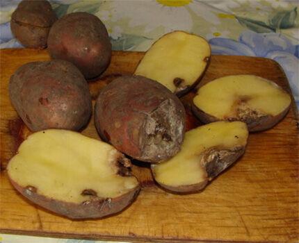 Вид замерзшей картошки