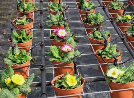 Drip irrigation potted flowers