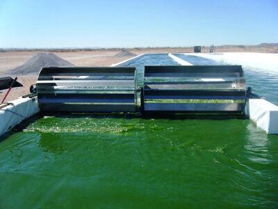 Выработка биоводорода из водорослей