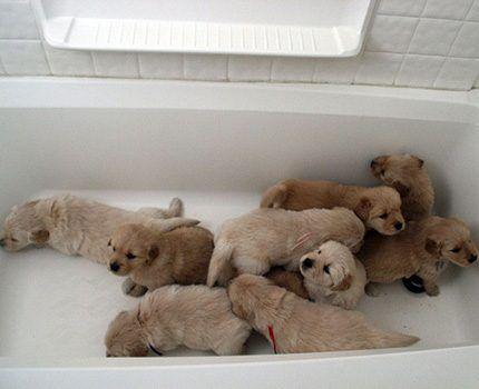 Купание животных в акриловой ванне