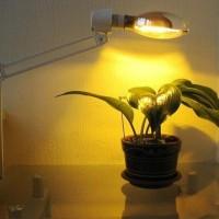 Натриевые лампы: разновидности, технические параметры, сфера применения + правила выбора