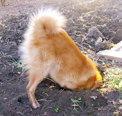 Собака ищет воду