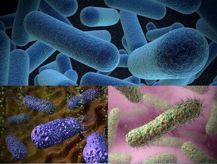 Микроорганизмы, питающиеся органикой