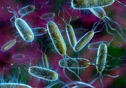 Функции бактерий