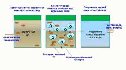 Для чего нужны бактерии для септиков
