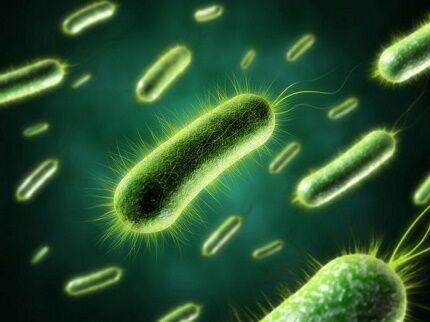 Как выглядят бактерии под микроскопом