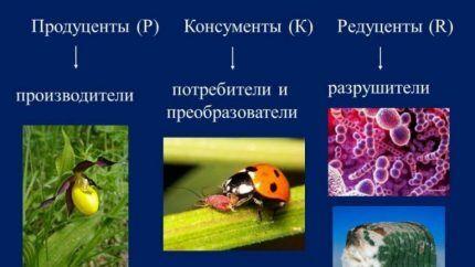 Участники экосистемы