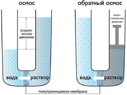 Лабораторная модель осмоса