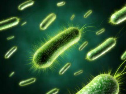 Бактерии, содержащиеся в биоактиваторах