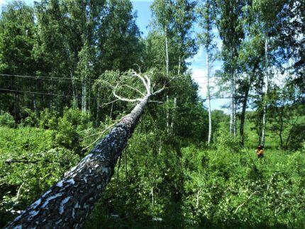 Дерево повредило ЛЭП