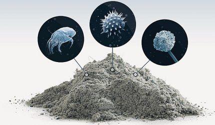 Пыль и живущие в ней микроорганизмы