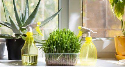 Увлажнение домашних растений