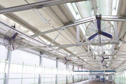 Вентиляторы в коровнике