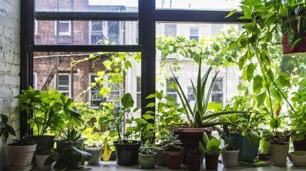 Домашние растения на подоконнике