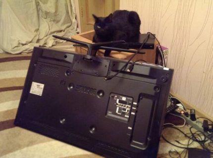 Кот и телевизор