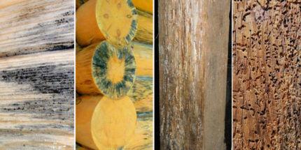 Поражение древесины
